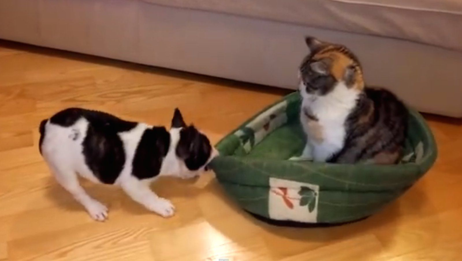 Puppy Attempts To Steal His Bed Back From World S Chillest Cat
