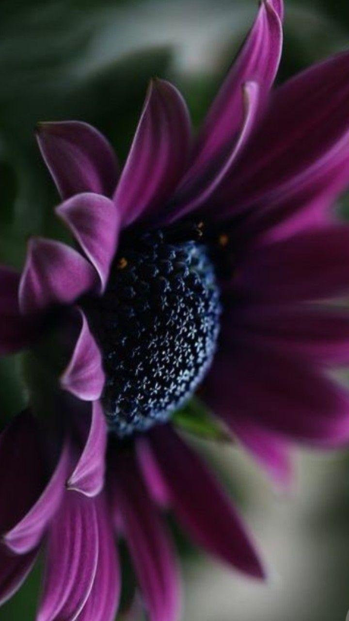 Fiori Selvatici Foto E Nomi pin di goretta cazzaro su fiori | fiori selvatici
