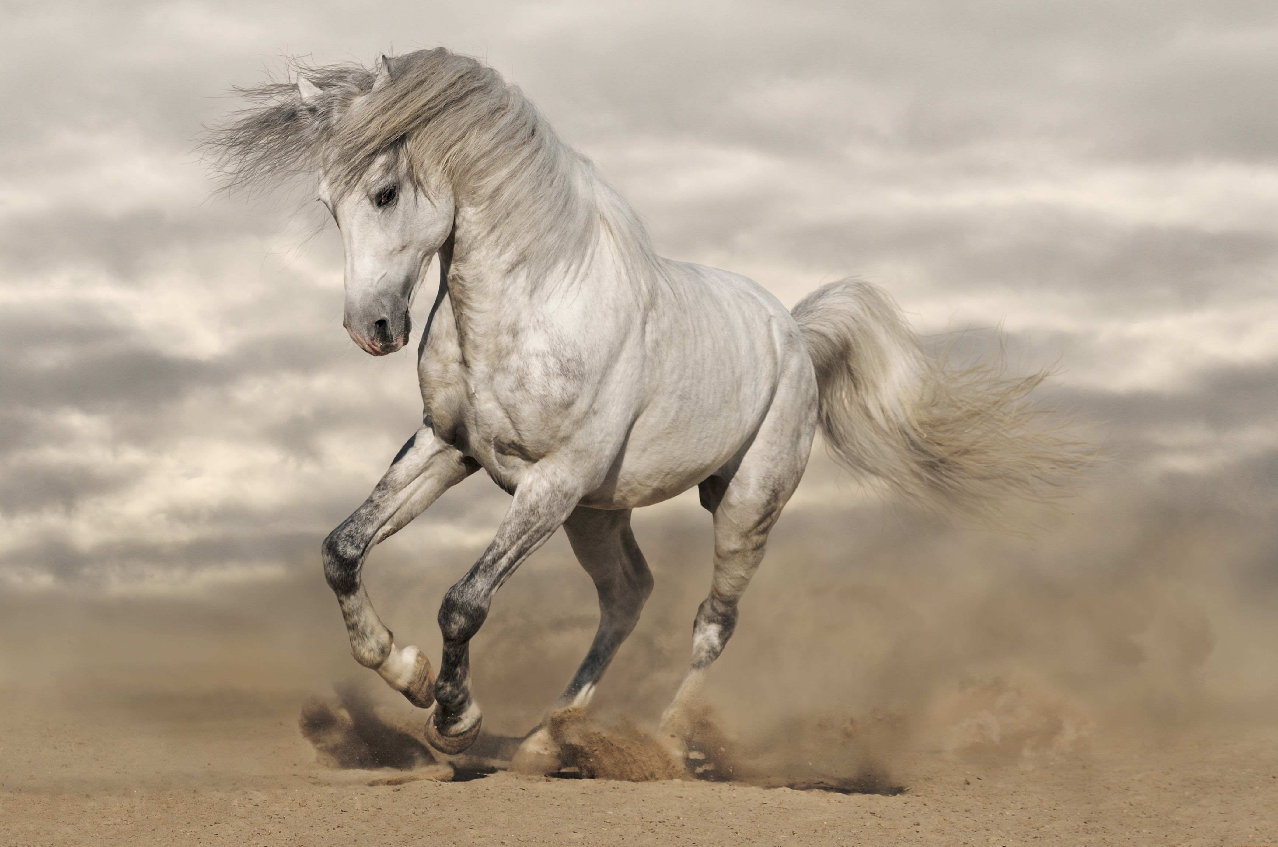 White Horse Sand Horse Dust Running Mane 4k Wallpaper Hdwallpaper Desktop Horses Horse Wallpaper Free Horses