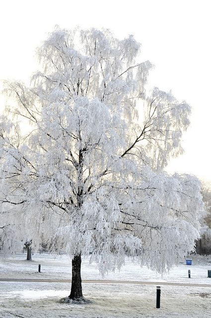 White Field - Tree, Forest of Dean, Gloucestershire, England