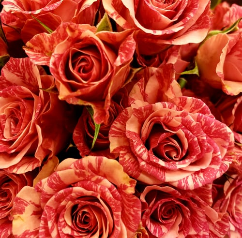 باقة ورد جميلة باقات ورد صباحية جميلة جدا باقة ورد كبيرة Zina Blog Flower Arrangements Flowers Rose