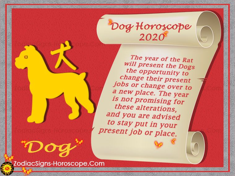 The Dog Horoscope 2020 Presents A Better Picture Compared To The Previous Year You Have The Favorable Alignments Of Th Horoscope 2020 Dog Horoscope Dog Zodiac