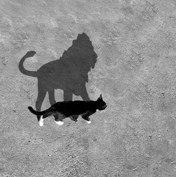 Surprise Shadow Cats Cast Cat Shadow Animals