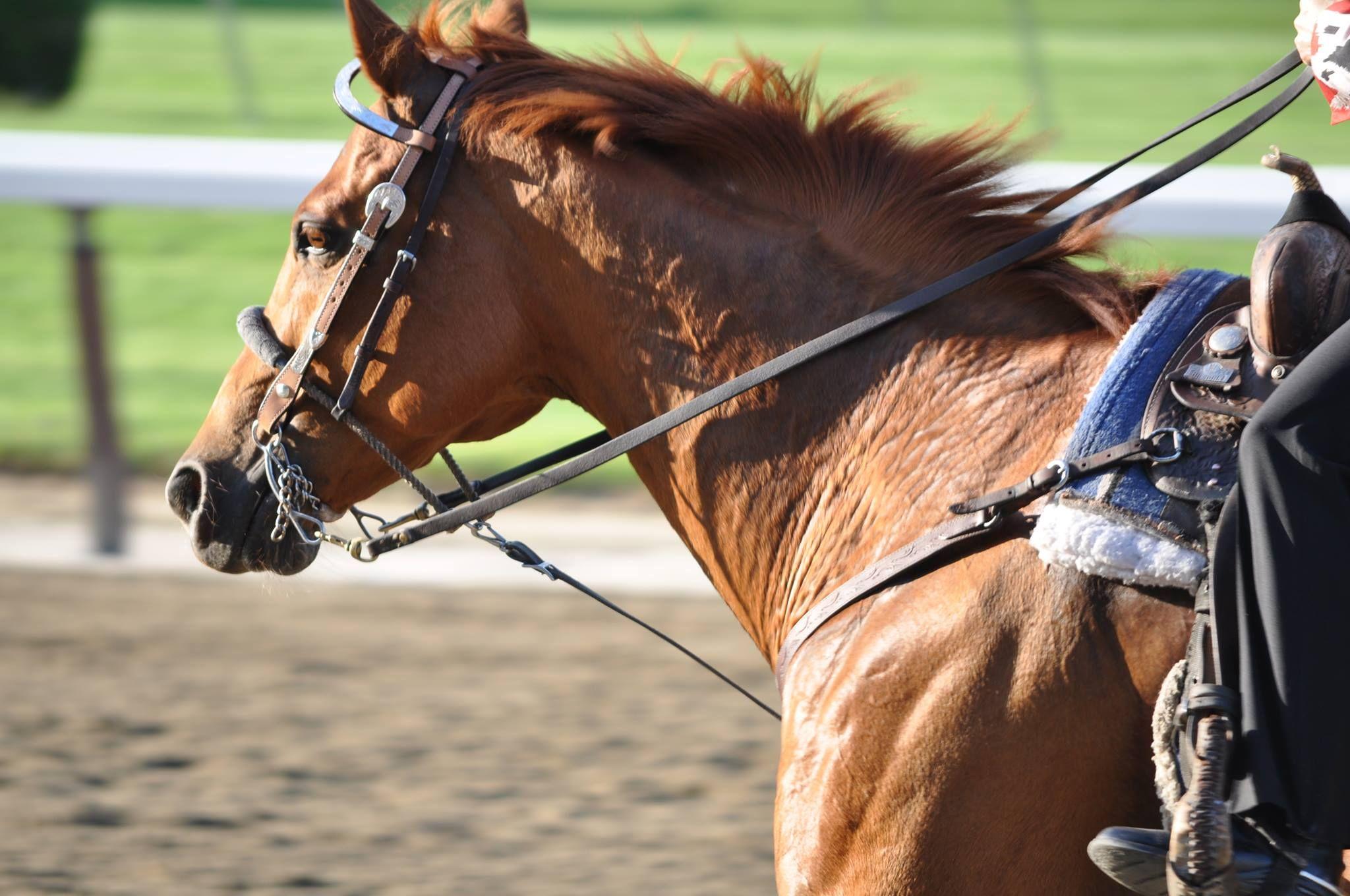 Belmont Race Track.  June 8th, 2013