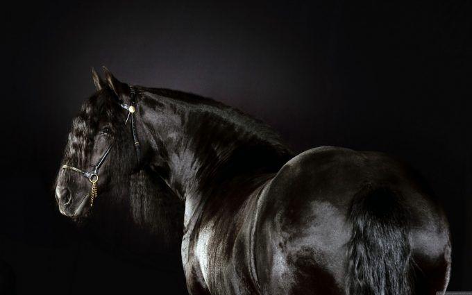 Black Horse Full Screen Hd Wallpaper For Desktop Horse Wallpaper Horses Horse Pictures Black and white horse wallpaper hd