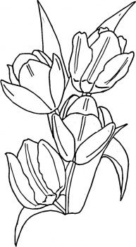 Tulips Coloring Page From Tulip Category Select 28283 Printable Crafts Of Cartoons Nature Animals Bible And Many More