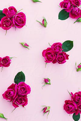 Rose background by Ruth Black for Stocksy United
