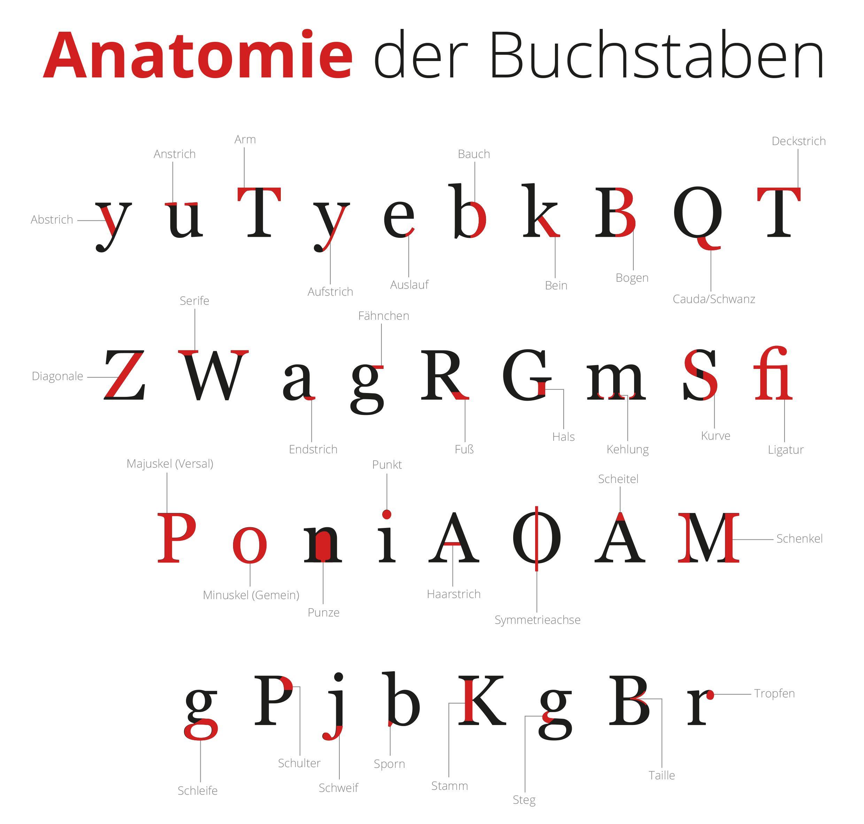 Anatomie der Buchstaben: Alles auf einem Blick! | Typography ...