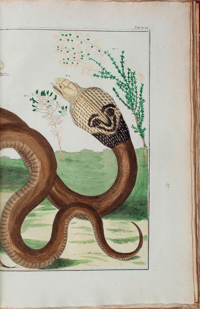 plates - Locupletissimi rerum naturalium thesauri accurata descriptio, et iconibus artificiosissimis expressio, per universam physices historiam : - Biodiversity Heritage Library