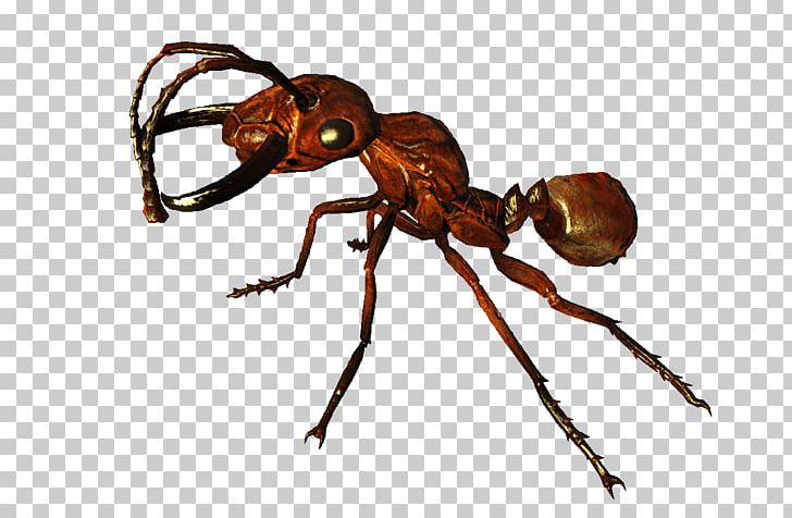 Red Imported Fire Ant Fallout 4 Nuka World Fallout 3 Fallout New Vegas Png Clipart Ant Ant Colony Arthropod Bethesd Nuka World Ants Fallout 4 Nuka World