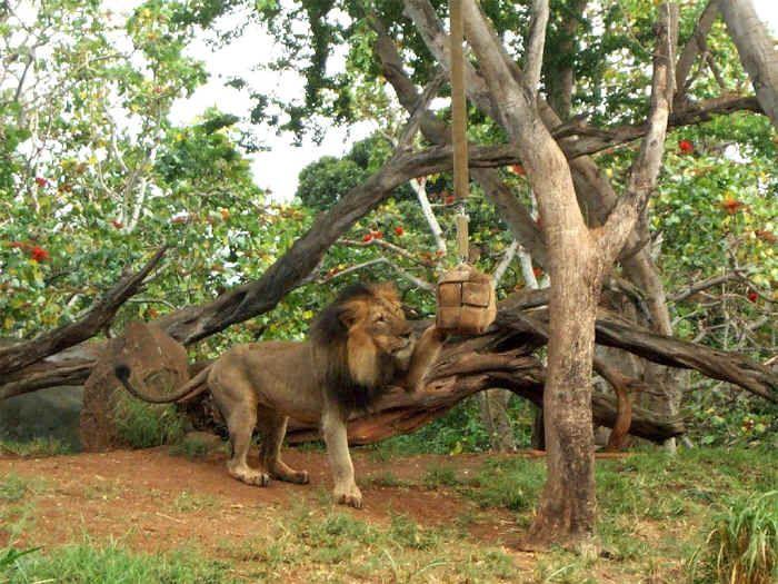 Holiday Enrichment 2001 - Animal Enrichment   Animals, Honolulu zoo, Zoo animals