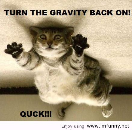 Funny Animal Quotes Silly Cats Pictures Cute Animals