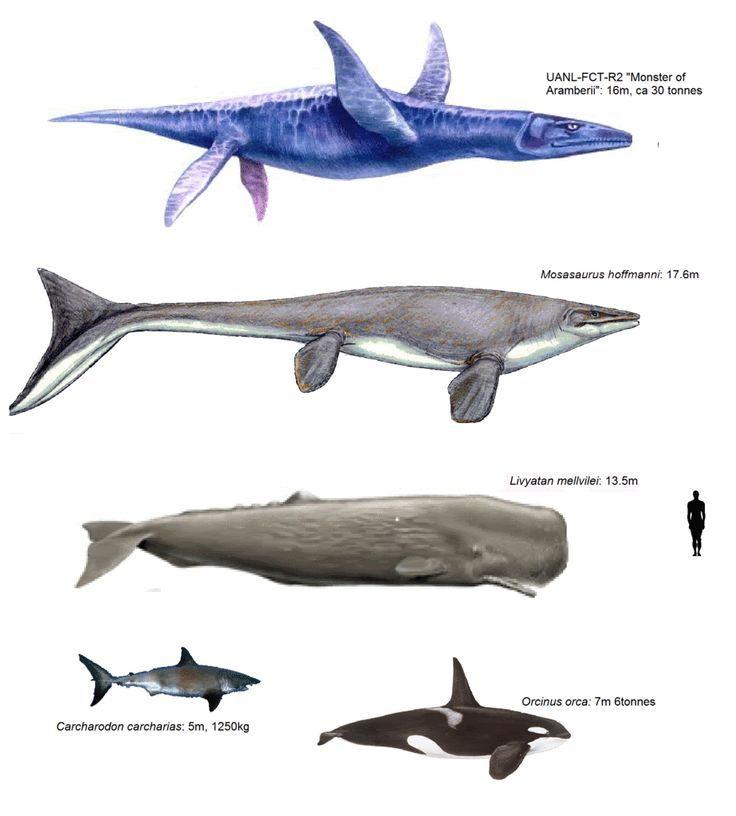 Comparativa de grandes animales marinos | Relatividad | Pinterest ...