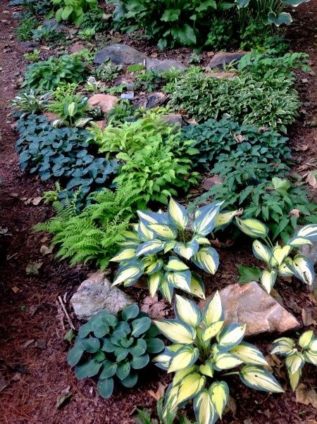 Add some rocks or large stones to the hostas under the deck   Garden ...