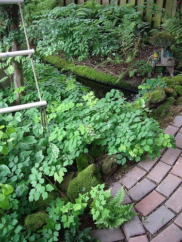 Babbling stream and vancouver hexandra ground cover | by lehua_mc