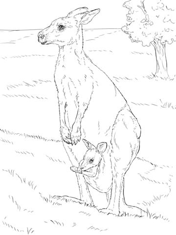 Canguro Gris Oriental con Cría Dibujo para colorear | animales ...
