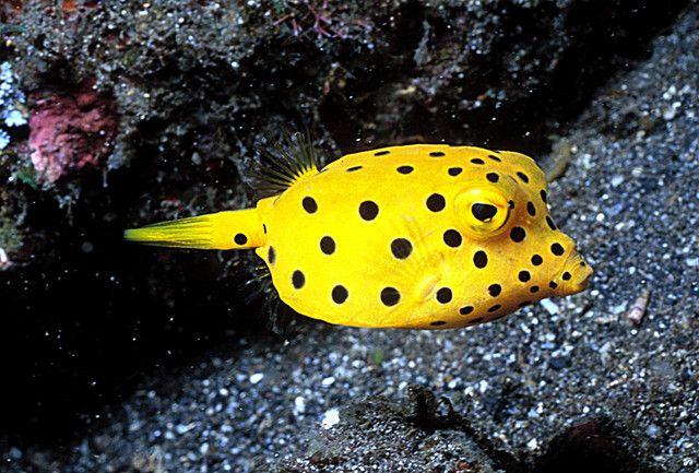 Related Image Yellow Fish Fish Ocean Creatures