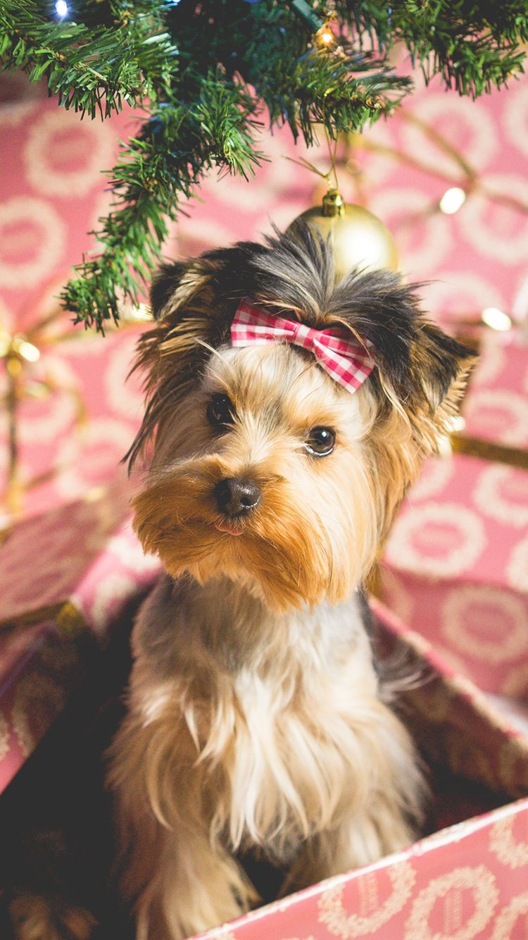 Cute Puppy Christmas Present iPhone 6 Wallpaper Dog