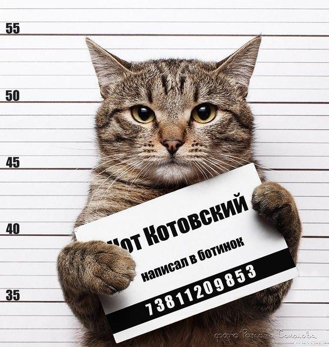Кот с табличкой преступника со статьёй про обоссанные ...