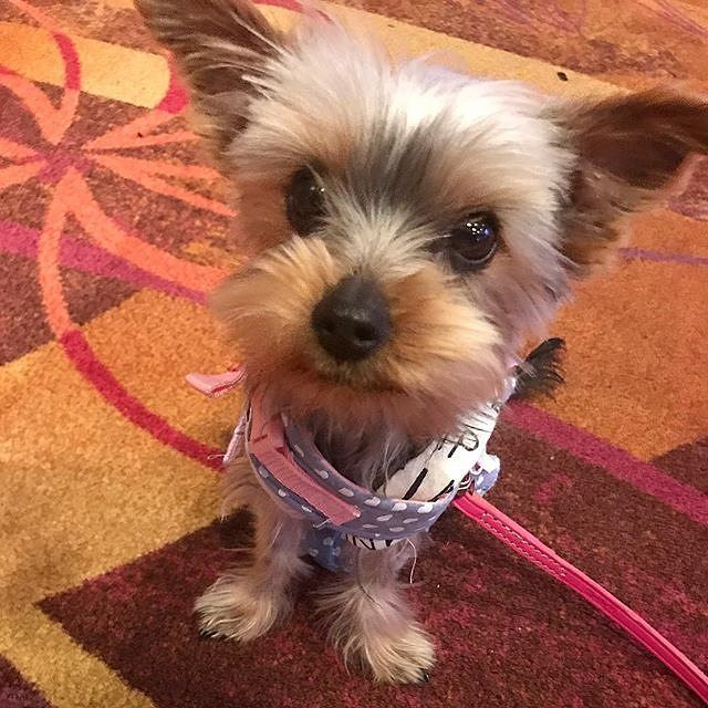My Humans Took Me To Barona Again My Favorite Place
