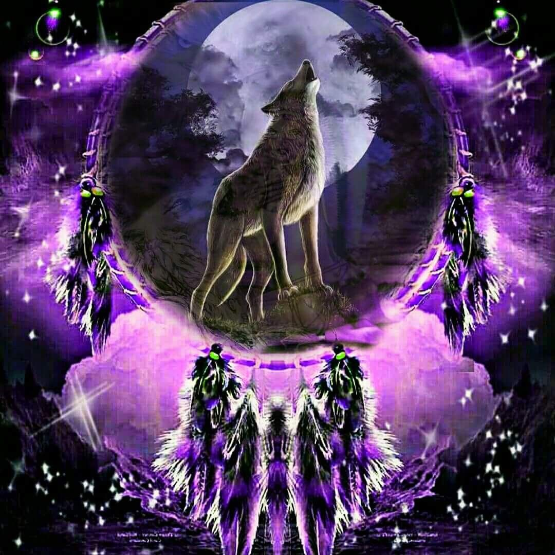 Dreamcatcher With Wolf With Images Wolf Artwork Wolf Art Wolf Photos