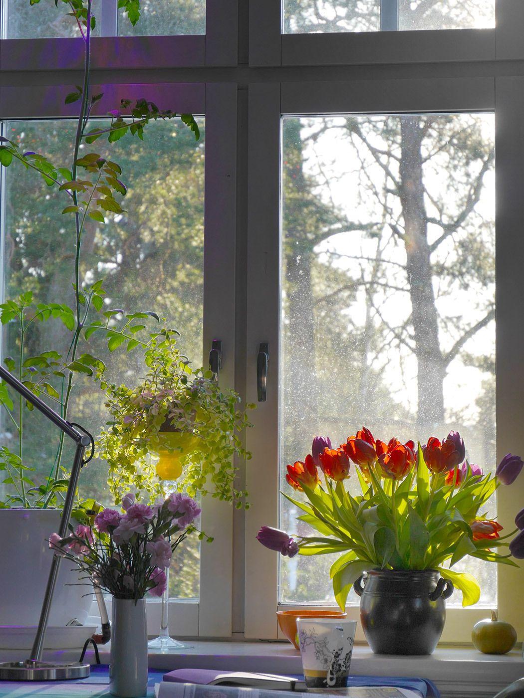 springlight2_web