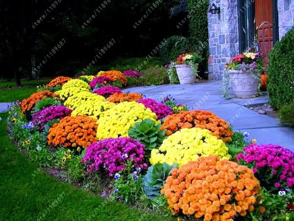 100 pcsbag ground cover chrysanthemum seeds perennial bonsai flower 100 pcsbag ground cover chrysanthemum seeds perennial bonsai flower seeds daisy potted plant mightylinksfo