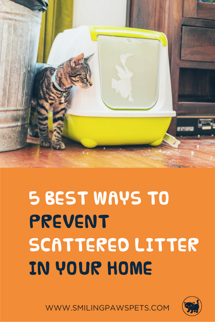 5 Simple Solutions To Prevent Scattered Litter In Your Home Cat