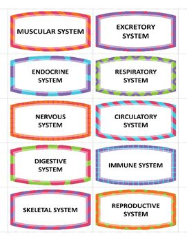 Memory Game For  Body Systems Digestive Skeletal Muscular And