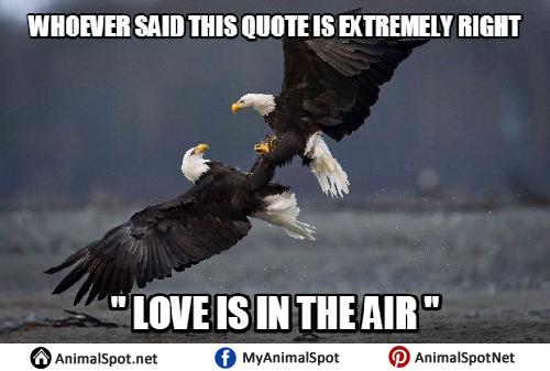 5b662f9500b4bb7ed066f7eb39271794 funny bald eagle memes different types of funny animal memes,Funny Eagles Meme