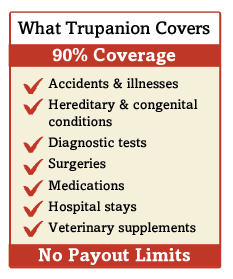 Why We Chose Trupanion Pet Insurance For Our Dogs With Images