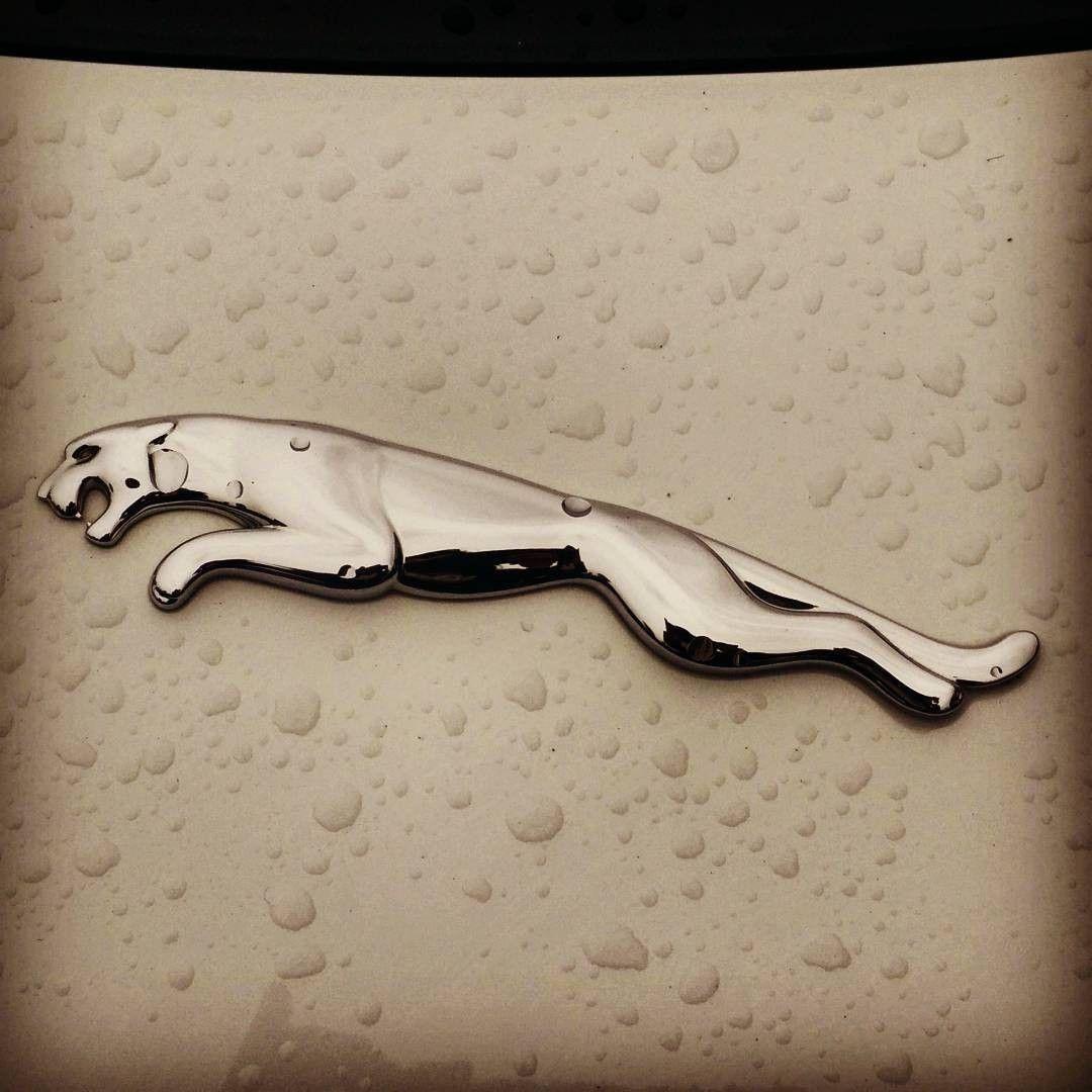 JAGUAR LOGO Car logos, Jaguar, Car