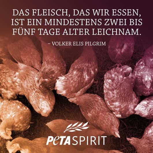 PETA Spirit Zitat von Pilgrim #veganquotes
