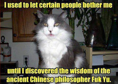 Pin On Animals Funny Katz