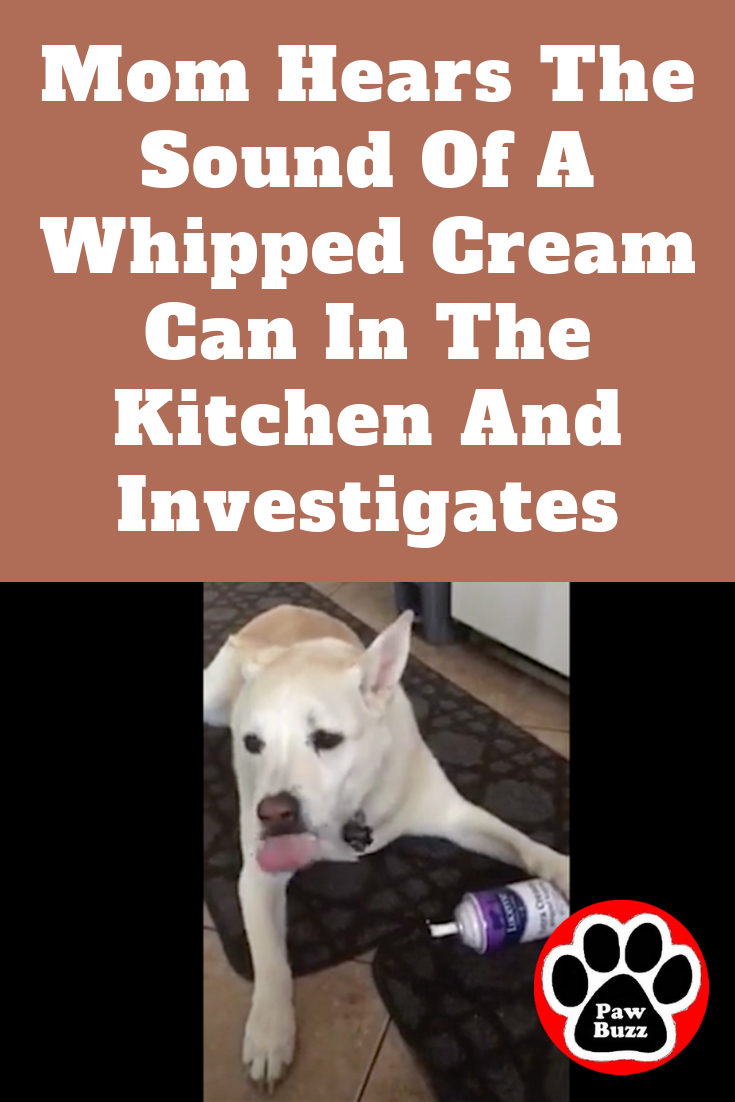 Mom Hears The Sound Of A Whipped Cream Can In The Kitchen