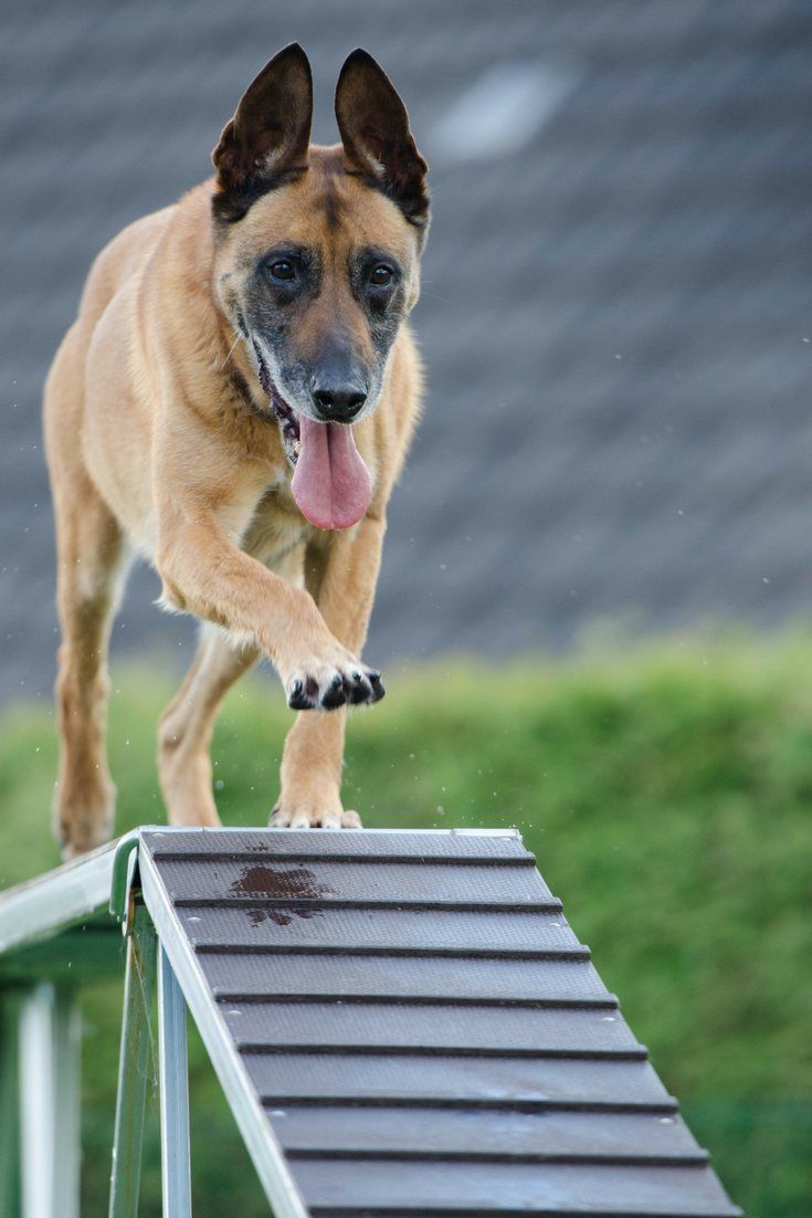 How to stop dogs jumping up easy and actionable tips