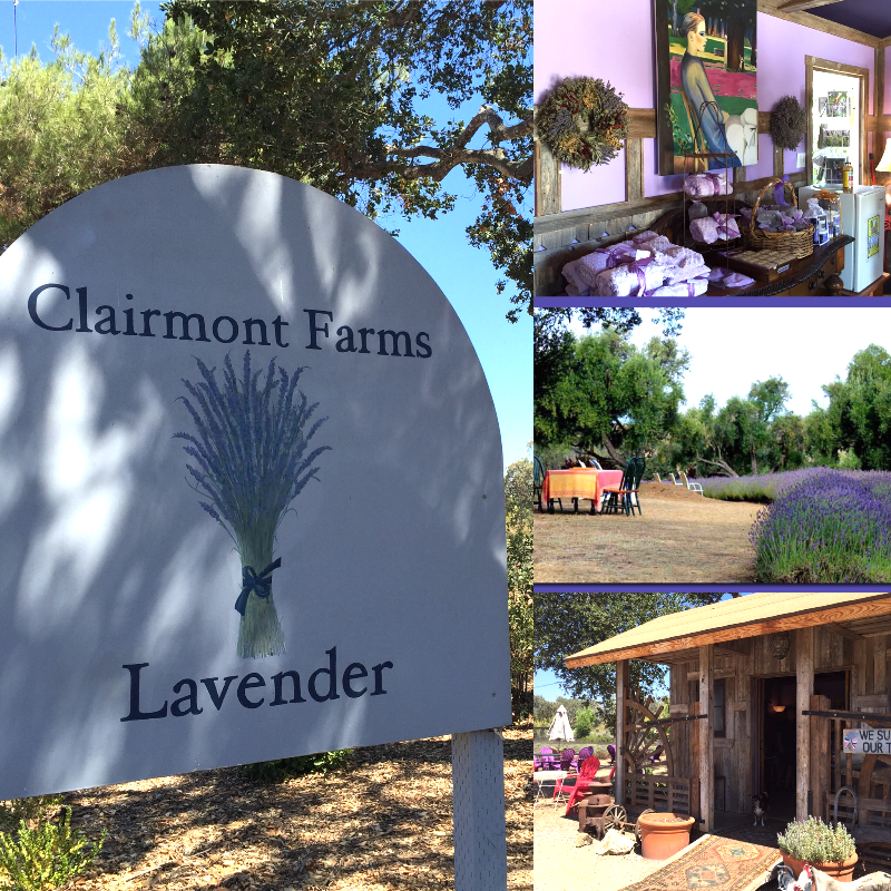 Visit Clairmont Farms Lavender for an enchanting day trip into the Santa Ynez Valley.