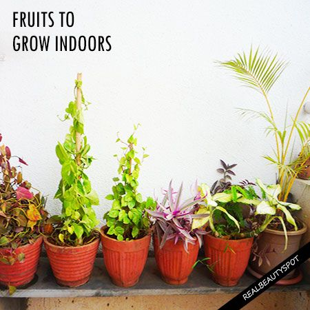 Best Fruits To Grow Indoors Theindianspot Growing Indoors Grow Fruit Indoors Fruit Plants