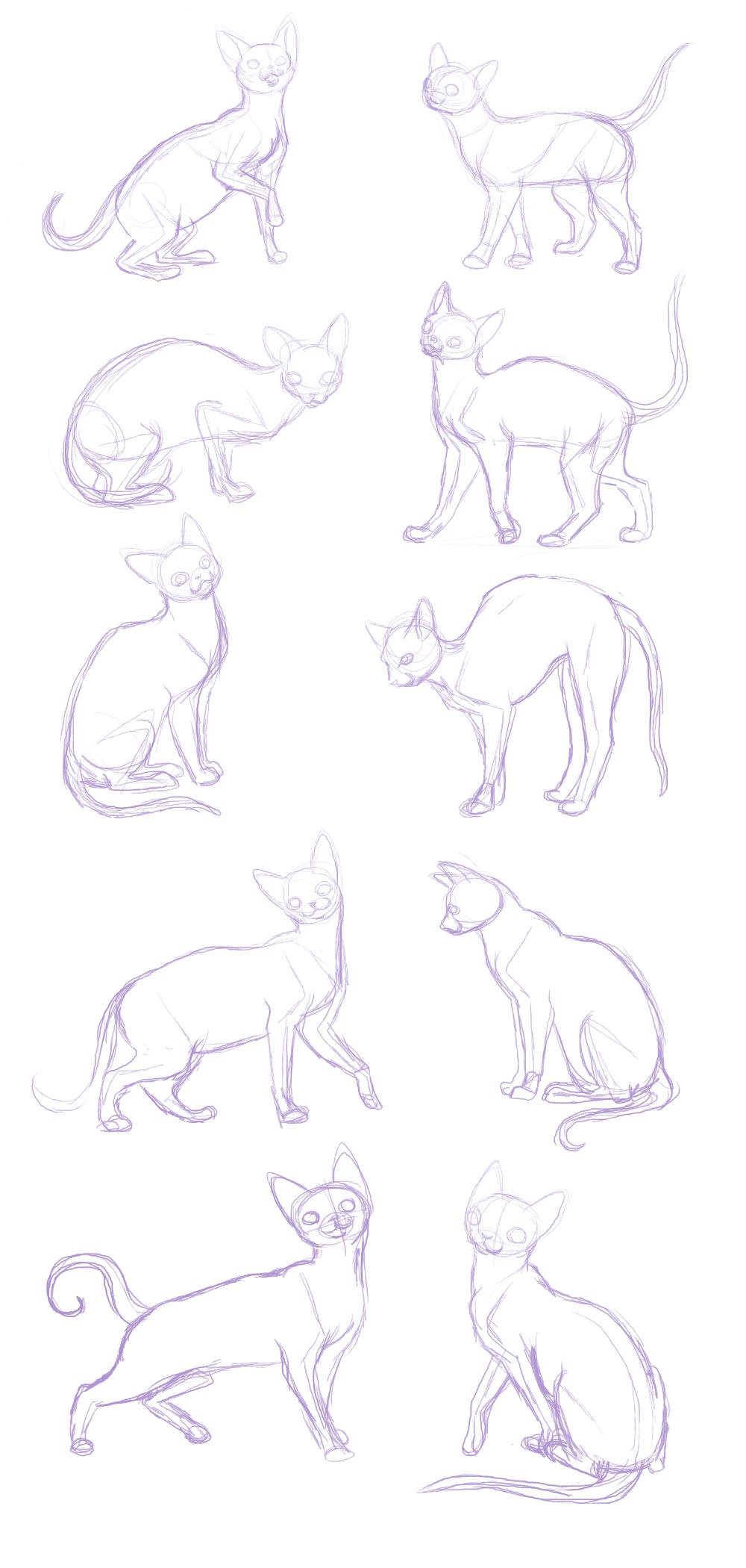 cat sketches-anatomy practice by BakaMichi.deviantart.com on ...
