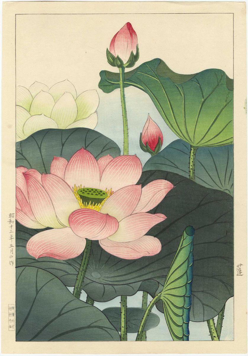 Nishimura Hodo Japanese Woodblock Print Lotus Blossoms Original 1938