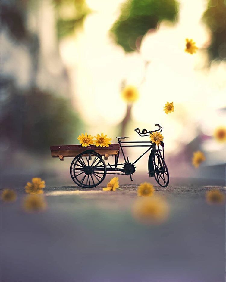 Pin By Harika Kiran On Pale Yellow Photography Wallpaper Miniature Photography Cool Pictures For Wallpaper Cool love cute photography wallpaper