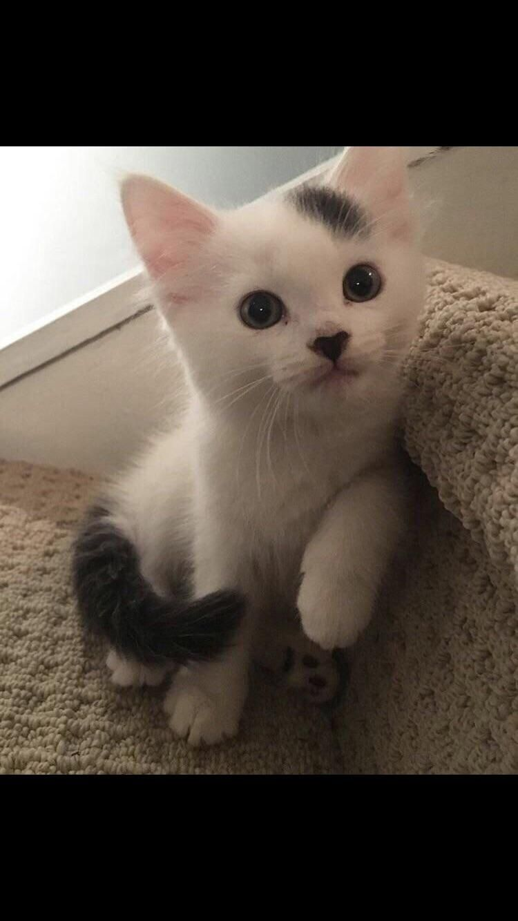 Youve Seen Him Before But Some Havent So Say Hi To Charles Https Ift Tt 2eklvnd Kittens Cutest Kitten Care Baby Cats