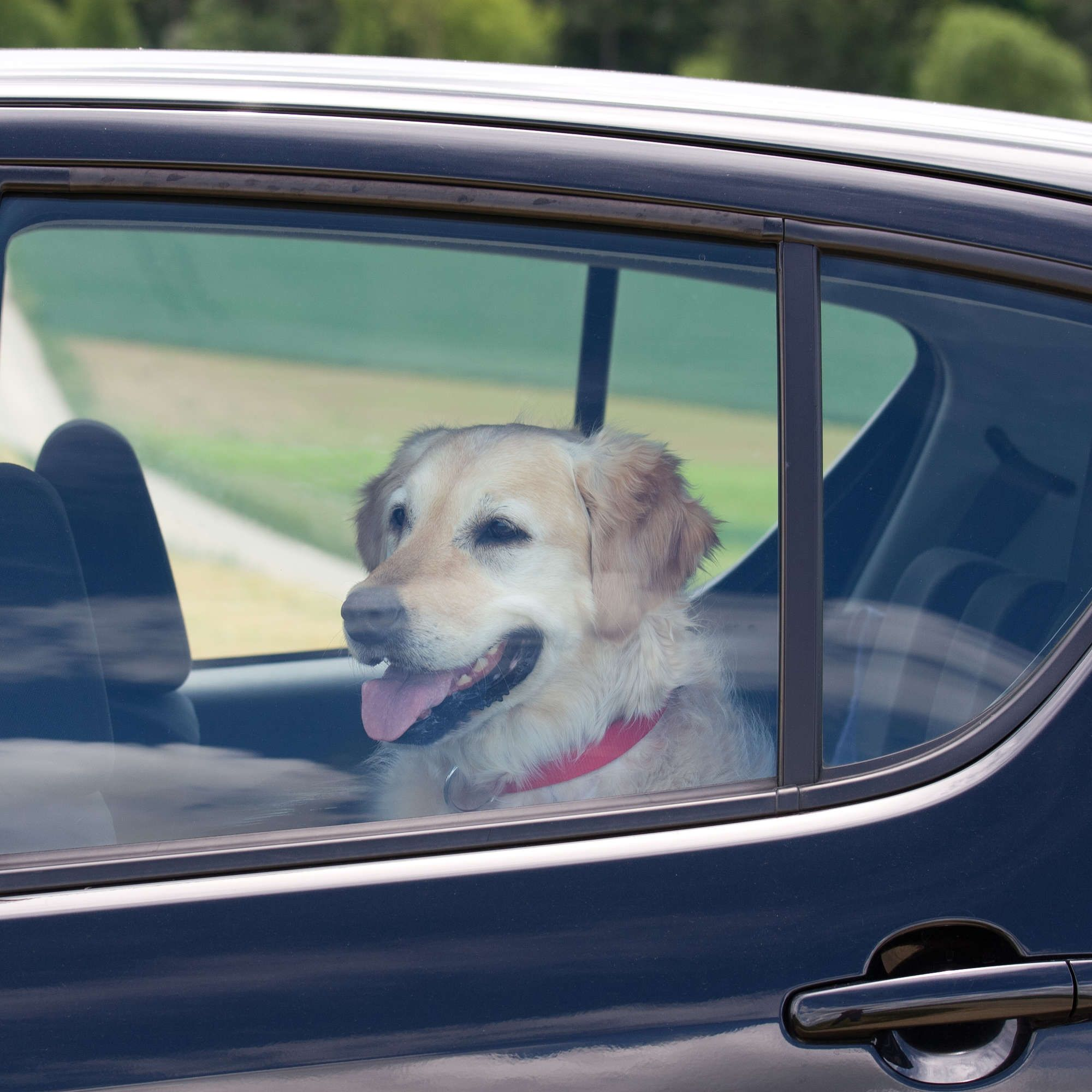Uber Will Let You Bring Your Pet Along for the Ride, if