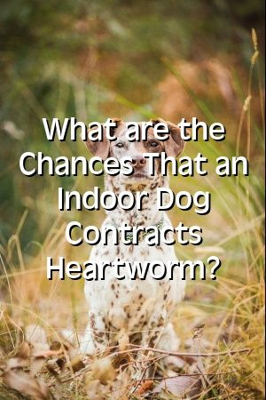 Emily Johnston Tells About What are the Chances That an Indoor Dog Contracts Heartworm?  #hunde    #bestapartmentdogs #chihuahua  #JackRussel  #pets  #puppy  #puppies