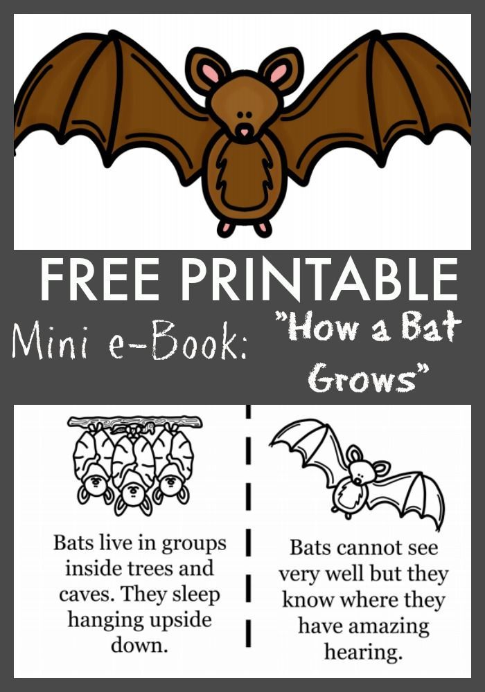 Free How A Bat Grows Printable Ebook Activities Mini Books