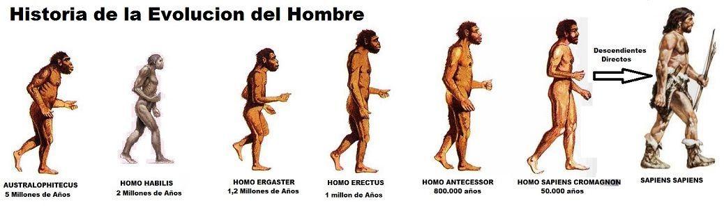 historia de la evolucion del hombre   Educación   Pinterest   De los ...