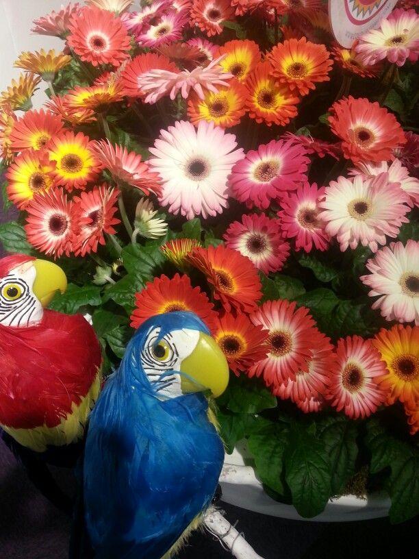 Happy colors # flowers# Aalsmeer