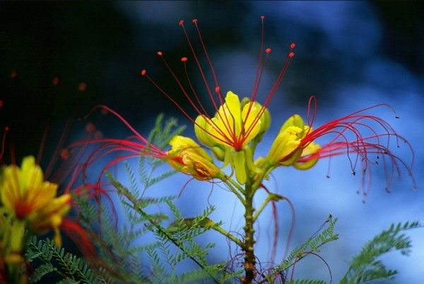 Digital Flowers | Flower with wonderful color effects ( © Samo Lesek)