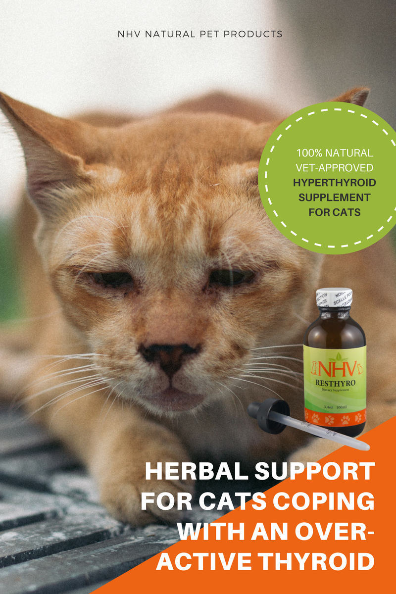 Resthyro For Cats Feline Hyperthyroidism Cat Diseases Cats