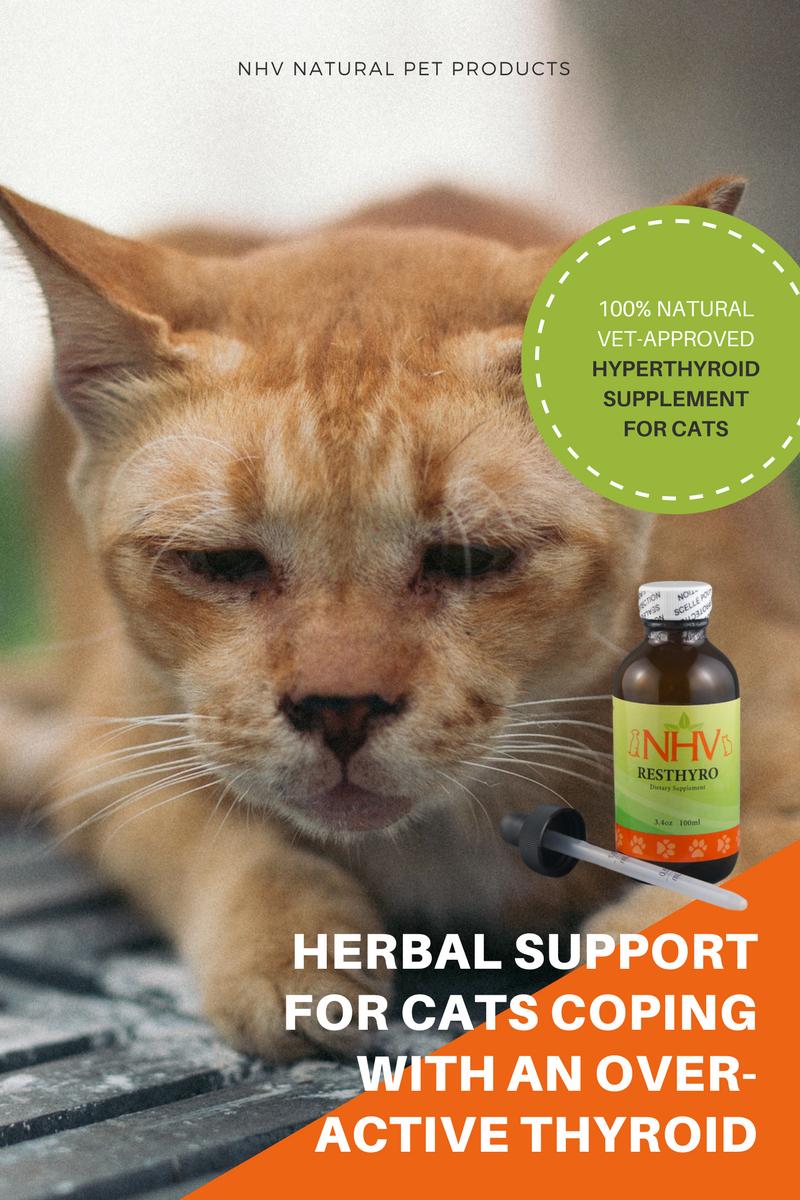 Resthyro™ for Cats Feline hyperthyroidism, Cat diseases